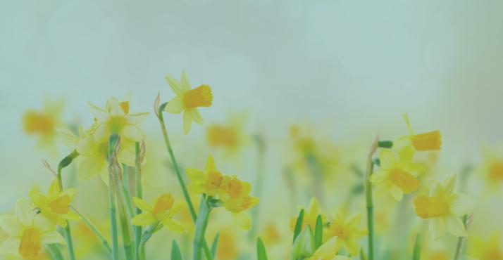 A new mindset for spring blog